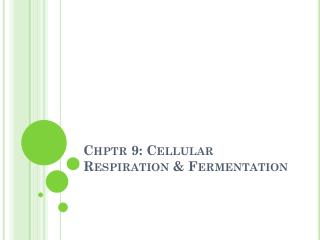 Chptr  9: Cellular Respiration & Fermentation