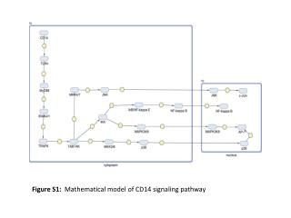 Figure  S1:   Mathematical model of CD14 signaling pathway