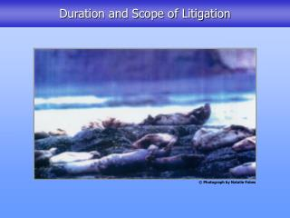 Duration and Scope of Litigation