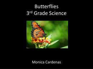 Butterflies  3 rd  Grade Science