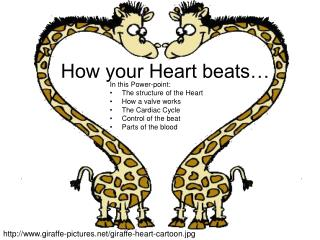 How your Heart beats…