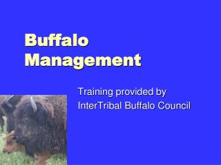 Buffalo Management