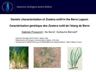 Genetic characterization of  Zostera noltii  in the Berre Lagoon