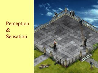 Perception & Sensation