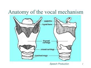 Anatomy of the vocal mechanism