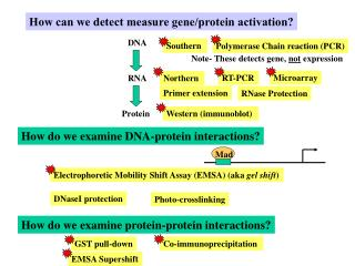 How can we detect measure gene/protein activation?