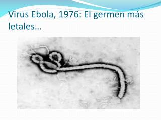 an introduction to the issue of ebola virus a member of the filoviridae Next article in issue: introduction ebola virus (ebov) is a member of the family filoviridae and selection on ebola zaire virus epidemic waves.