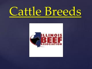 Cattle Breeds