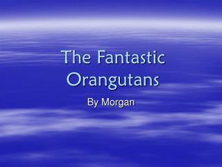 The Fantastic Orangutans