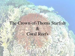 The Crown-of-Thorns Starfish  & Coral Reefs