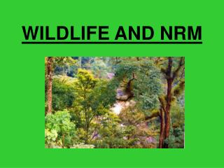 WILDLIFE AND NRM