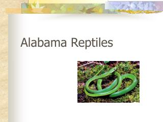 Alabama Reptiles