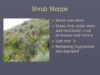 Shrub Steppe