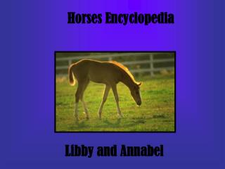 Horses Encyclopedia
