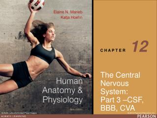 The Central Nervous System: Part 3 –CSF, BBB, CVA