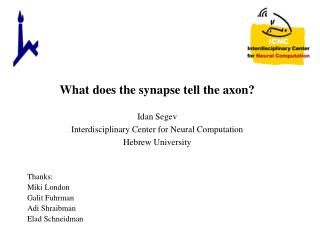What does the synapse tell the axon?