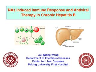 NAs Induced Immune Response and Antiviral Therapy in Chronic Hepatitis B