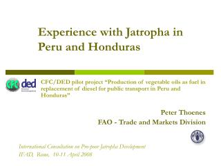Experience with Jatropha in Peru and Honduras