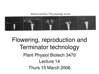 Flowering, reproduction and Terminator technology