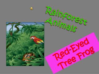 rainforest animals vinicius