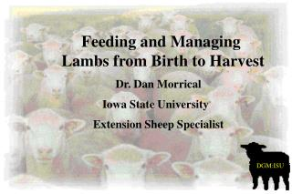 Dr. Dan Morrical Iowa State University   Extension Sheep Specialist