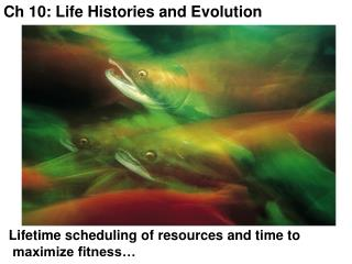 Ch 10: Life Histories and Evolution