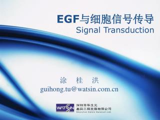 EGF 与细胞信号传导 Signal Transduction