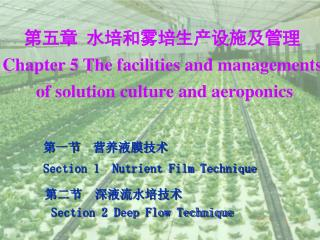 第五章  水培和雾培生产设施及管理 Chapter 5 The facilities and managements  of solution culture and aeropo
