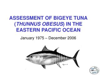 ASSESSMENT OF BIGEYE TUNA ( THUNNUS OBESUS ) IN THE EASTERN PACIFIC OCEAN