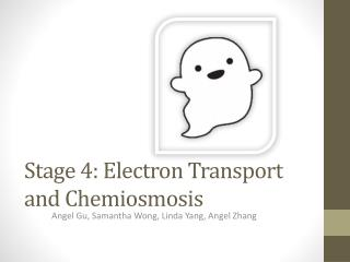 Stage 4: Electron Transport and Chemiosmosis