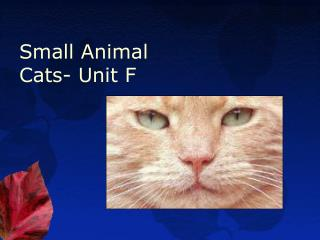 Small Animal Cats- Unit F