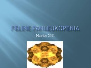 Feline Panleukopenia