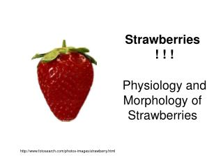 Strawberries  ! ! ! Physiology and Morphology of Strawberries