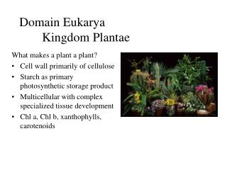 Domain Eukarya 	Kingdom Plantae