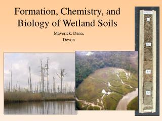 Formation, Chemistry, and Biology of Wetland Soils