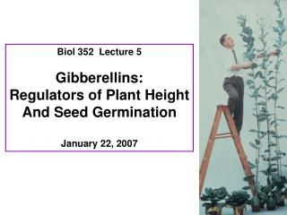 Biol 352  Lecture 5 Gibberellins: Regulators of Plant Height And Seed Germination January 22, 2007