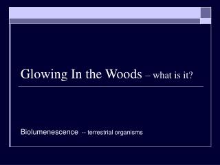 Glowing In the Woods  – what is it?