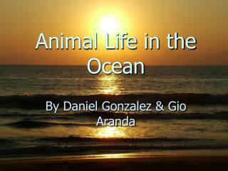 Animal Life in the Ocean