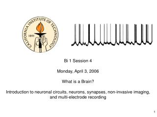 Bi 1 Session 4  Monday, April 3, 2006 What is a Brain?