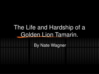 The Life and Hardship of a Golden Lion Tamarin.