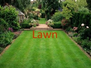 Establishing  Maintaining Lawns