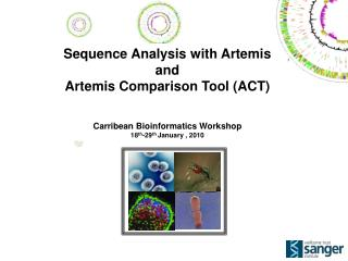 Sequence Analysis with Artemis and Artemis Comparison Tool (ACT) Carribean Bioinformatics Workshop