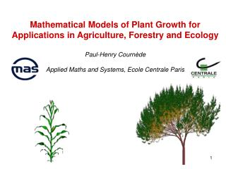 « DigiPlante » Modelling, Simulation and Visualization of Plant Growth