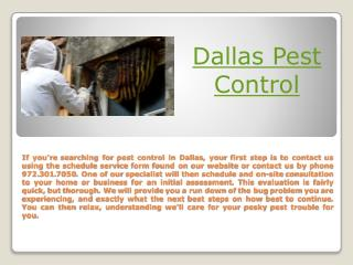 Dallas Termite Treatment