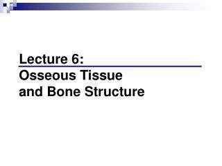 Lecture 6:  Osseous Tissue  and Bone Structure
