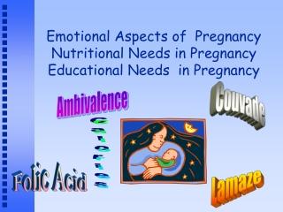 The first Prenatal Visit