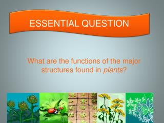 What are the functions of the major structures found in plants ?