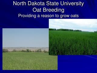 North Dakota State University  Oat Breeding Providing a reason to grow oats