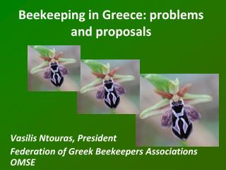 Beekeeping in Greece: problems and proposals