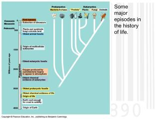Some major episodes in the history of life.
